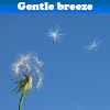Gentle breeze 5 Differences