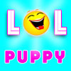 Funny Cute Puppies