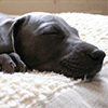 Sleeping Puppy Jigsaw Puzzle