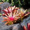 Jigsaw: Bromeliads