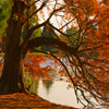 Jigsaw: Autumn Pond Tree