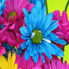 Jigsaw: Bright Flowers