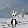 Penguin Soccer