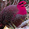 Pink crested bird slide puzzle