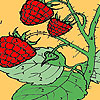 Red berry garden coloring