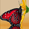 Red hungry butterfly puzzle