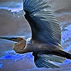 Flying blue stork puzzle