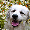Dogs among the flowers puzzle